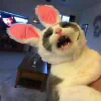 Pat Cat