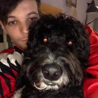 Harry Stylesface