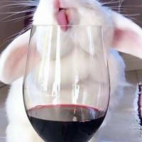 Пьяный кролик