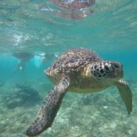 Turtle Jr.