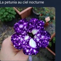 nat144p