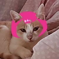 sophie.hatter0