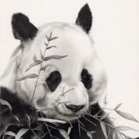 Panda Lector