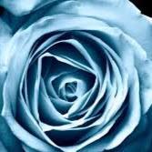 Rosa Azul60916
