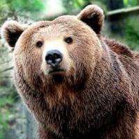Bear George