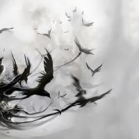 Dark Raven74805