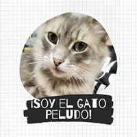 Javiera Araya Rojas78855
