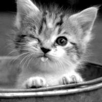 Baby Cat ♡