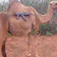 Llama Tactica