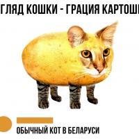 Кошка-картошка