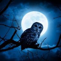 Филин, летящий под ночной луной
