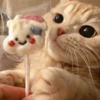 rosie_cat