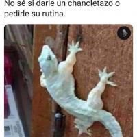 picopalquelee2.0