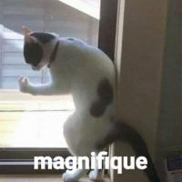 marinette_7331