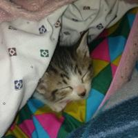 Tatiana Gonzalez4101