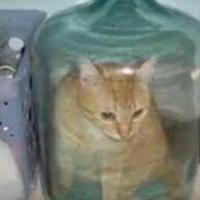 neutral_cat