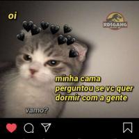 katt_katt