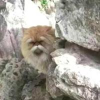 A_wise_cat