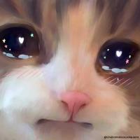 Sad_Cat_