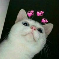 aria cat
